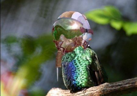 Ocell motorista